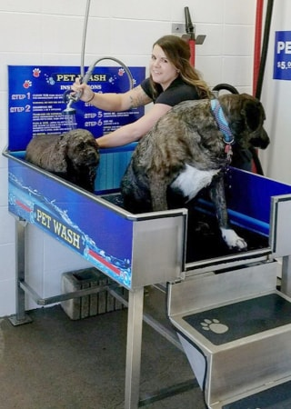 Dogs Love Our Pet Wash