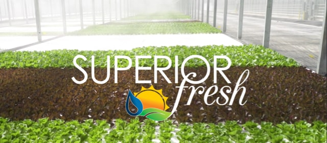 Superior Fresh Aquaponic Greens